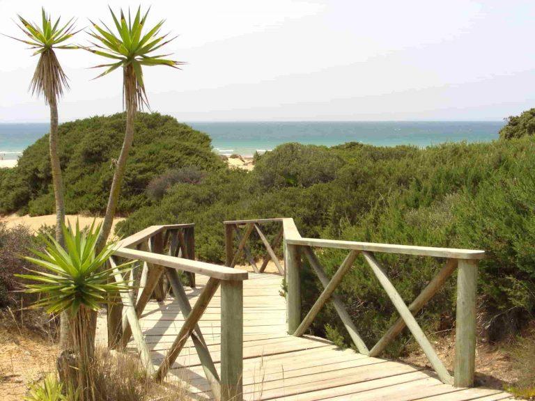 vegetación cerca de la playa