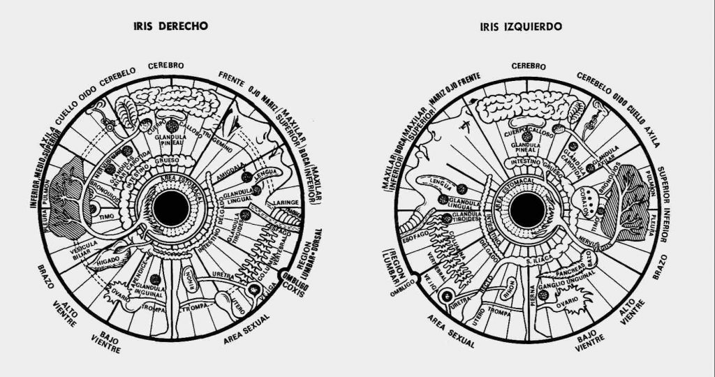 áreas topográficas de los iris de ambos ojos