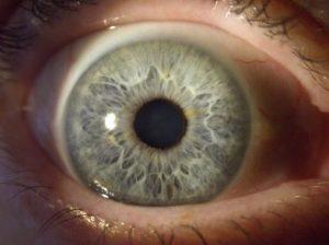 muestra quinta de un iris